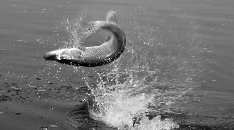 Поймали мелкую рыбешку — к печали и разорению.